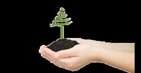 treereplanting