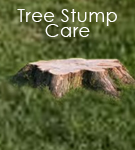 Tree Stump Care
