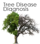 Tree Diagnosis